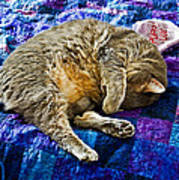 Cat Nap Art Print