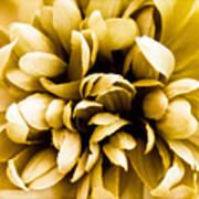Artificial Flower Art Print