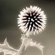 Artistic Black And White Flower Art Print