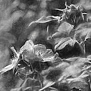 artistic painterly Black and white monochromatic two dogroses summer 2014 Art Print