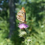 Artistic Butterfly Stand  Art Print