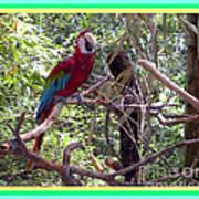 Artistic Wild Hawaiian Parrot Art Print