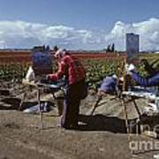 Artists Painting Tulip Fields Standing In A Row  Art Print