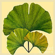 Arts And Crafts Movement Ginko Leaves Art Print