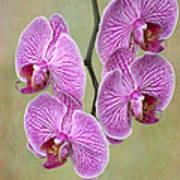 Artsy Phalaenopsis Orchids Art Print