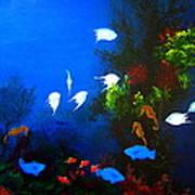 Aruba Reef Art Print