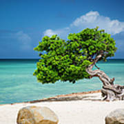 Aruba Tree Art Print