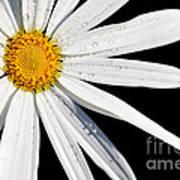 As Bright As A Daisy... Art Print
