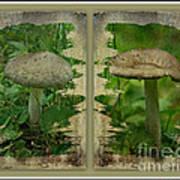 As I Age - A Mushroom's Tale Art Print