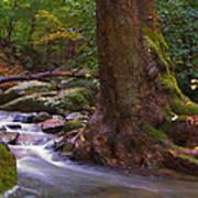As The River Runs Art Print