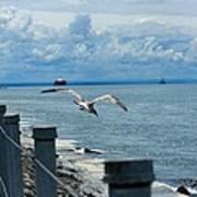 As The Seagull Flies Art Print