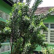 Asant Plants Art Print