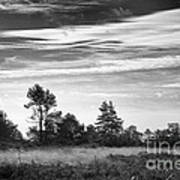 Ashdown Forest In Black And White Art Print