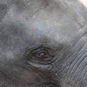Asian Elephant Face Art Print