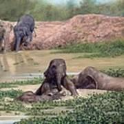 Asian Elephants - In Support Of Boon Lott's Elephant Sanctuary Art Print