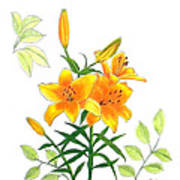Asiatic Hybrid Lily Art Print