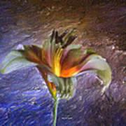 Asiatic Lily Art Print