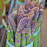 Asparagus Stalks Bound With Rubber Bands Art Print