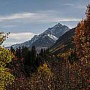 Aspen And Mountains 1 Art Print