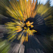 Aspen Explosion Art Print