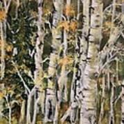 Aspen Hollow Art Print