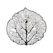 Aspen Leaf Skeleton 1 Art Print