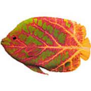 Aspen Leaf Tropical Fish 1 Art Print