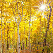 Aspen Morning Art Print by Darren  White