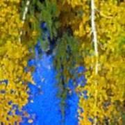 Aspen Reflection Art Print
