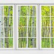 Aspen Tree Forest Autumn Time White Window View  Art Print by James BO  Insogna