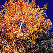 Aspen Tree Art Print
