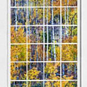 Aspen Tree Magic Cottonwood Pass White Window Portrait View Art Print by James BO  Insogna