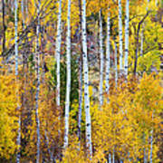 Aspen Tree Magic Art Print