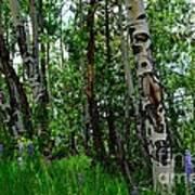 Aspen Trees Art Print