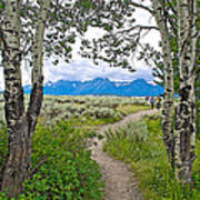 Aspen Trees On Trail To Jackson Lake At Willow Flats Overlook In Grand Teton National Park-wyoming  Art Print
