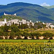 Assisi From The Sunflower Fields Art Print