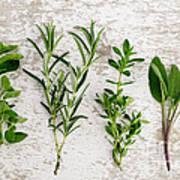 Assorted Fresh Herbs Art Print