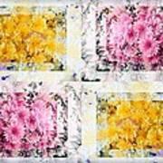Aster Mix 01 Art Print