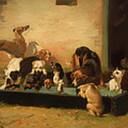 At A Dogs' Home Art Print