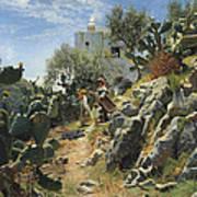 At Noon On A Cactus Plantation In Capri Art Print