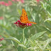 At Rest - Gulf Fritillary Butterfly Art Print