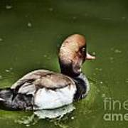 At The Duck Pond Art Print