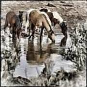 At The Watering Hole 1 Art Print