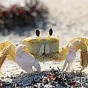 Atlantic Ghost Crab 2760 Art Print