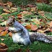 Attentive Squirrel Art Print
