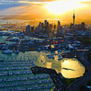 Auckland Oil On Canvaz Art Print
