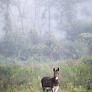 August Morning - Donkey In The Field. Art Print by Gary Heller