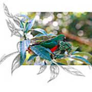 Australian King Parrot Art Print