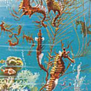 Australian Seahorses Art Print