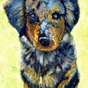 Australian Shepherd Puppy Art Print by Janine Riley